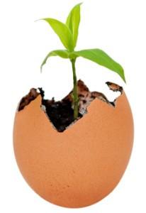 incubator egg