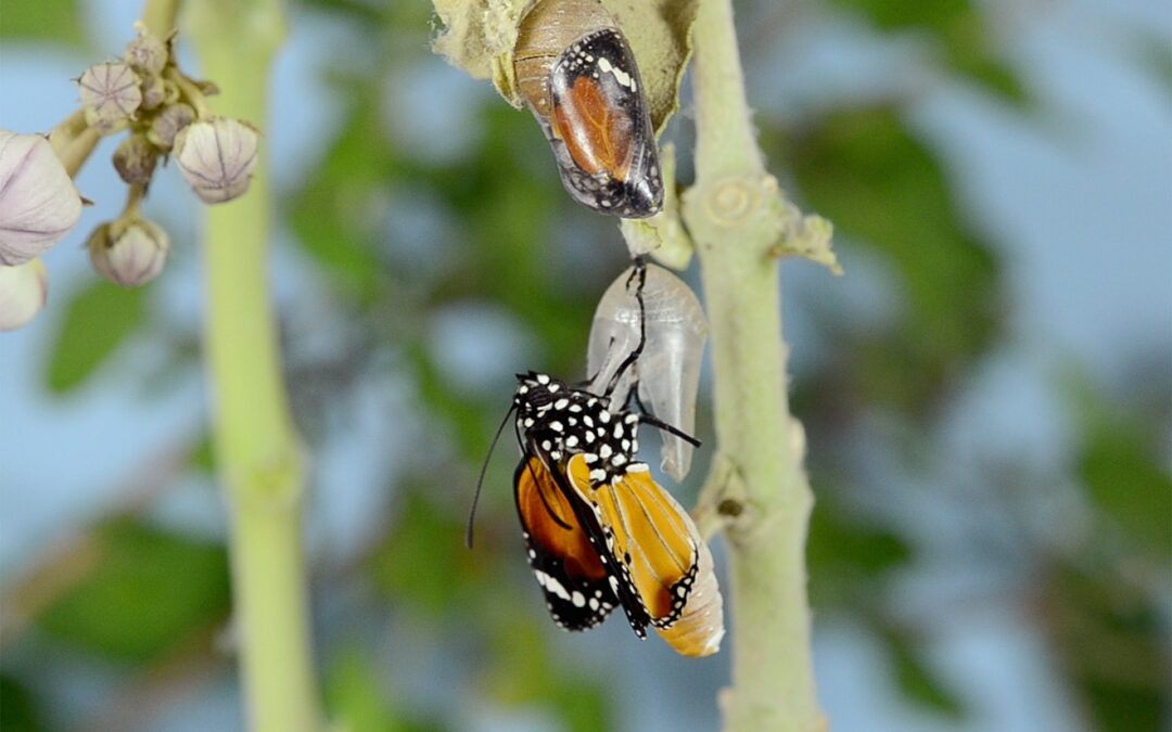 Letting Go/ Letting Come: Use this time of emergence to refresh your business/life